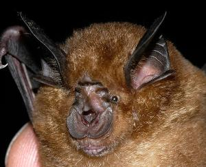 Chinese Bats Confirmed as Source of SARS