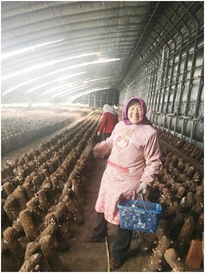 Woman Improves Family Conditions by Working on Mushroom Farm - All