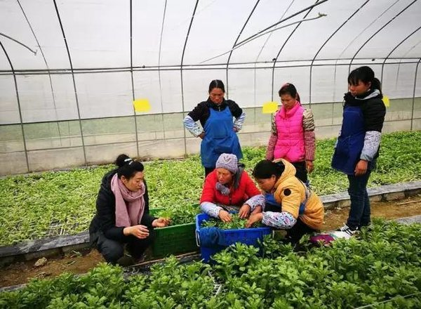 Entrepreneur Devotes Herself to Poverty Relief, Children's Education in SW China