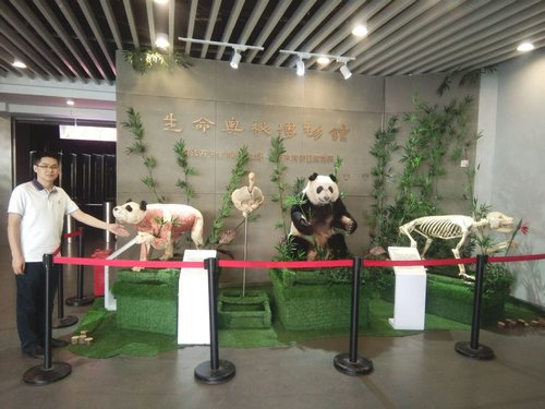 giant panda\u0027s body parts go on display in sichuan all china Opossum Body Diagram sichuan province,shows visitors the plastinated muscles, internal organs, hide and skeleton of the female panda xin ni\u0027er [china daily huang zhiling]