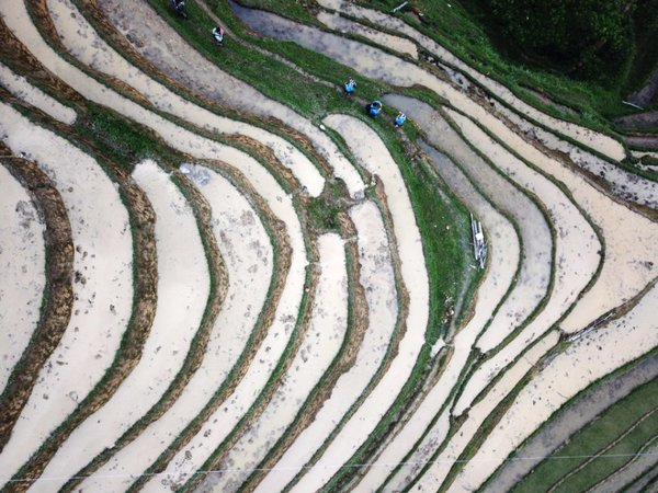 Aerial View of Terraced Fields in Miao Ethnic Village in SW China's Guizhou