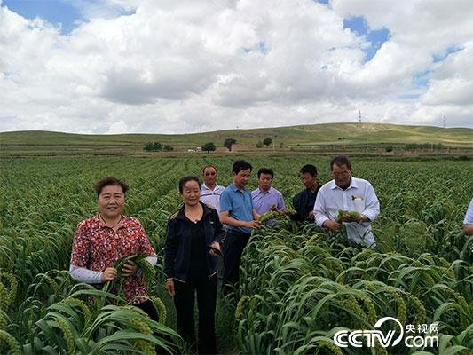 Village Secretary Helps Villagers Escape Poverty in NW China