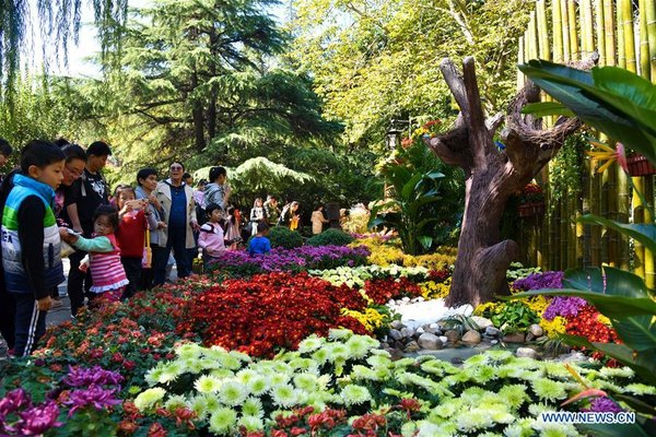 People Watch Blooming Chrysanthemum in Jinan, China's Shandong