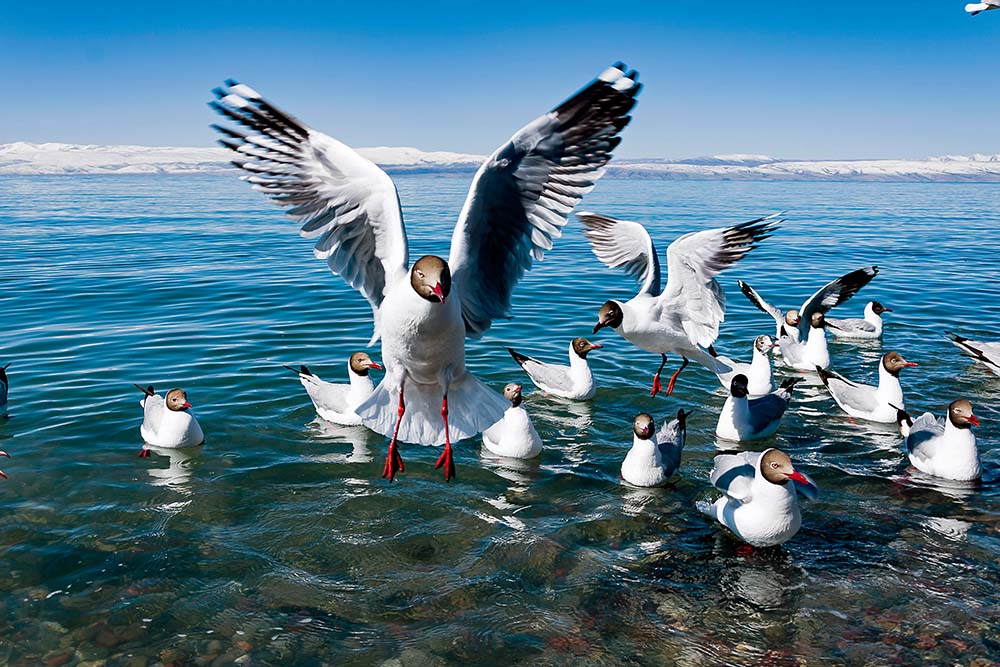 Qinghai Lake Renowned for Beautiful Landscape, Bird Watching