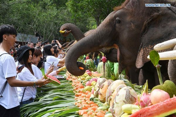 CHINA-YUNNAN-XISHUANGBANNA-ASIAN ELEPHANTS-CONSERVATION (CN)